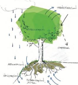croquis arbre